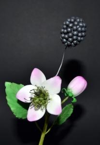 Mora (capullo, flor y fruto)