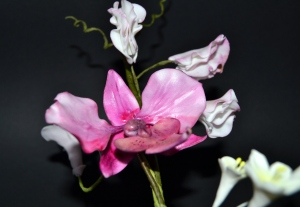 Orquídea y flor de guisante