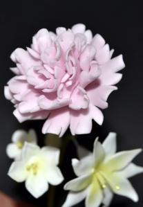 Clavel y flores fantasía